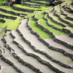 shutterstock_rice-terrace